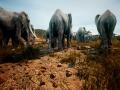《动物世界生存》游戏截图-5小图
