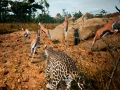 《动物世界生存》游戏截图-7小图