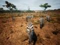 《动物世界生存》游戏截图-10小图