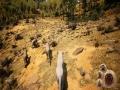 《动物世界生存》游戏截图-2小图