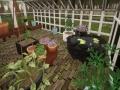 《兔子温室》游戏截图-6