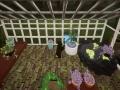 《兔子温室》游戏截图-4